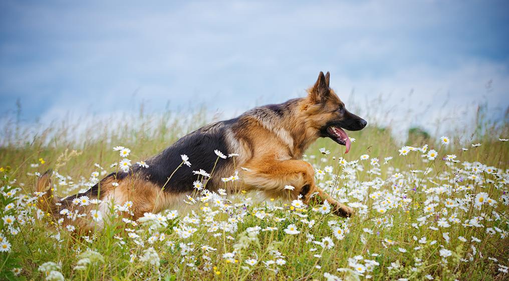 עדכני 10 סוגי כלבים למשפחה עם ילדים CW-79